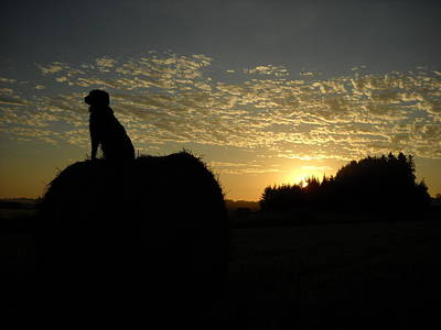 Dog On Hay Greeting Sunrise Art Print