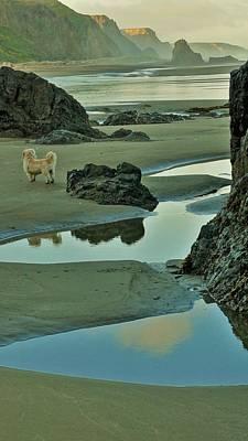 Photograph - dog on Irish Beach by Lisa Dunn