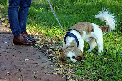 Photograph - Dog On Leash With Legs by Cora Wandel