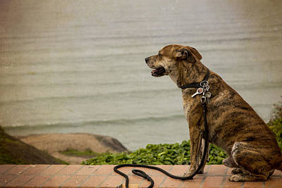 Photograph - Dog On The Beach by Kathryn McBride