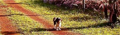 Photograph - Dog On The Driveway by Chuck Snyder