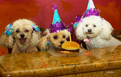 Photograph - Dog Party by Diana Haronis