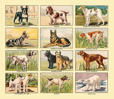 Painting - Dog Pattern by Gary Grayson