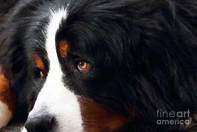 Puppies Digital Art - Dog . Photo Artwork by Wingsdomain Art and Photography
