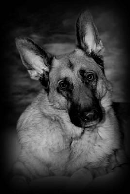 Photograph - Dog Portrait by Angie Tirado