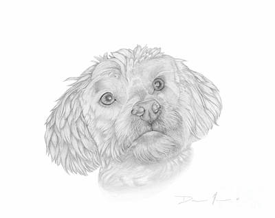 Drawing - Dog Portrait Marsh Mellow by Dave Nevue