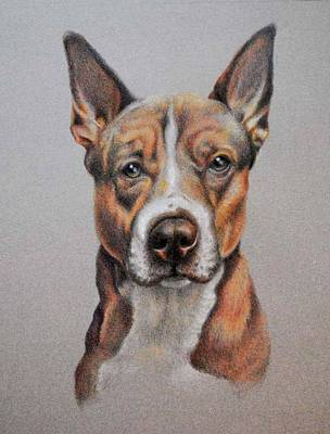 Dog Portrait Art Print by Sonja Funnell