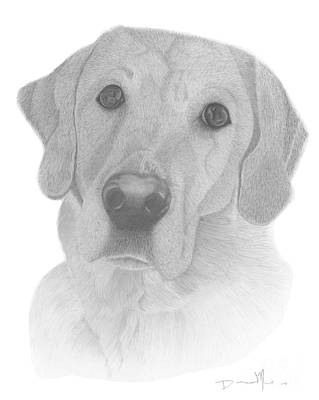Drawing - Dog Portrait Webster by Dave Nevue