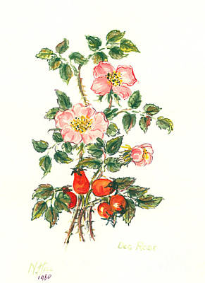 Hip Drawing - Dog Rose by Nell Hill