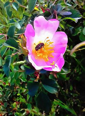 Photograph - Dog Rose With Beetle by Dorothy Berry-Lound