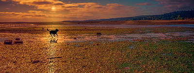 Sunset Photograph - Dog Run by Marci Potts