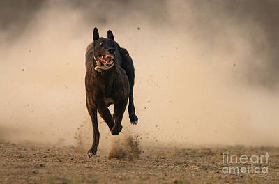 Dog Race Track Photograph - Dog Run by Tahir Abbas