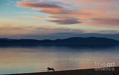 Photograph - Dog Silhouette On The Sunset Lake by Suzanne Luft