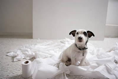 Dog Sitting On Bathroom Floor Amongst Shredded Lavatory Paper Art Print by Chris Amaral