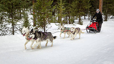 Photograph - Dog Sled Fun by Jack Bell