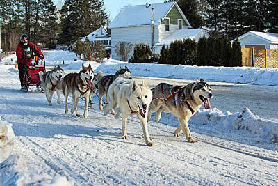 Photograph - Dog Sled Race In Canada by Tatiana Travelways