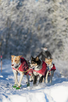 Photograph - Dog Sled Team by Scott Slone