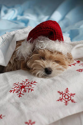 Dog Sleeping In Bed With Santa Hat Art Print