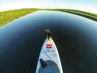 Photograph - Dog Sup  by Will Gudgeon