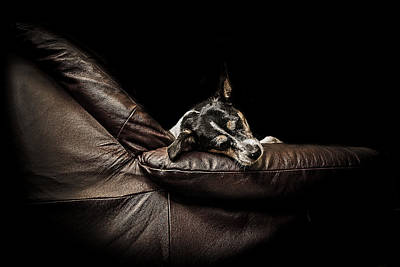 Portraits Royalty-Free and Rights-Managed Images - Dog tired by Paul Neville