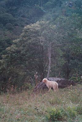 Photograph - Dog, Tree And Sages by David Cardona