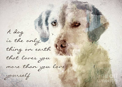 Photograph - Dog True Love by Andrea Anderegg