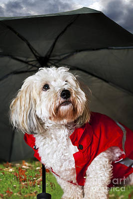 Animals Photos - Dog under umbrella by Elena Elisseeva