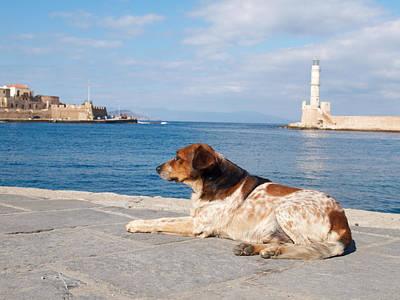 Photograph - Dog Watch by Jouko Lehto