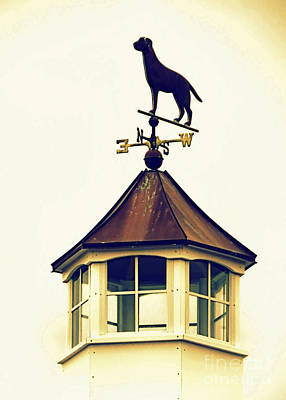 Photograph - Dog Weathervane by Janice Drew
