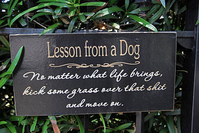 Photograph - Dog Wisdom by Juergen Roth