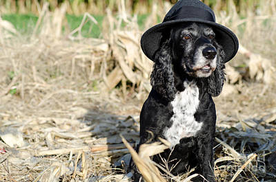 Cocker Spaniel Wall Art - Photograph - Dog With A Hat by Mats Silvan