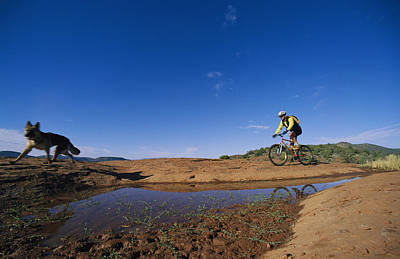 Man And Nature Photograph - Dog With Cyclist Riding Along Water by David Edwards