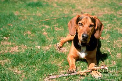 Dog With Stick Art Print