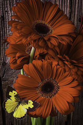 Gerbera Daisy Photograph - Dogface Butterfly On Red Daisy by Garry Gay