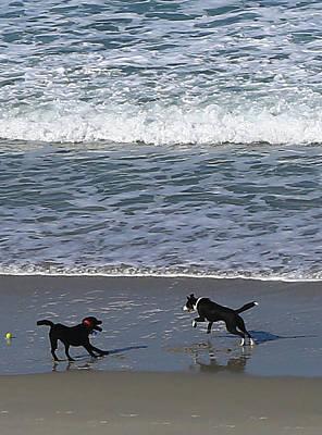 Photograph - Doggie Fun by Nareeta Martin