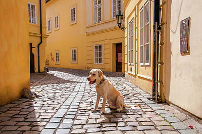 Photograph - Doggie In Old Prague. Color by Jenny Rainbow