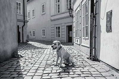 Photograph - Doggie In Old Prague. Monochrome by Jenny Rainbow