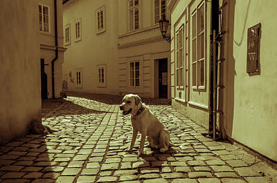 Photograph - Doggie In Old Prague. Vintage Sepia by Jenny Rainbow