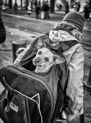 Photograph - Doggie On The Move by Luis Esteves