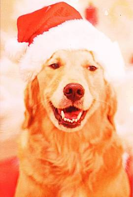 Photograph - Doggie Santa by Anne-elizabeth Whiteway