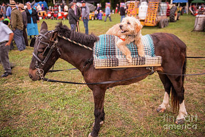 Photograph - Doggie Takes A Ride by David Arment