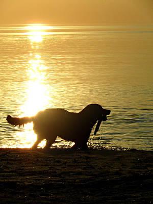 Photograph - Doggy Beach Dreams by Cyryn Fyrcyd