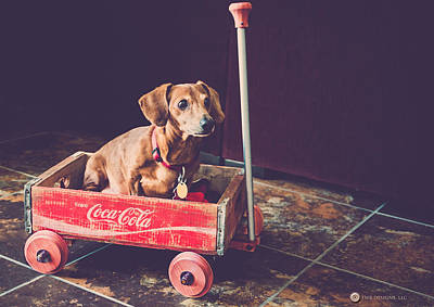 Photograph - Doggy In A Wagon by Teresa Blanton
