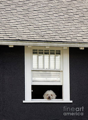 Photograph - Doggy In The Window by John  Mitchell