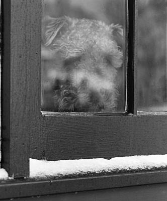 Photograph - Doggy In The Window by Paul Ross