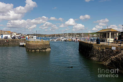 Photograph - Doggy Paddle Falmouth Quay by Terri Waters