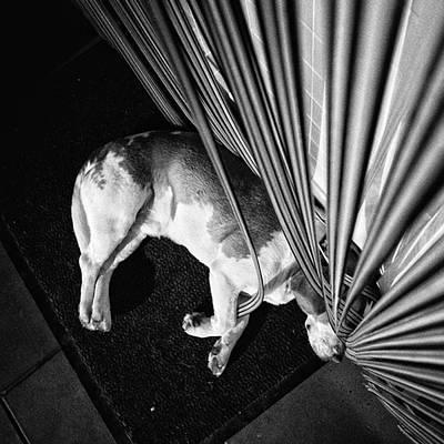 Pets Wall Art - Photograph - Dog.net  #dog #animal #pet #instadog by Rafa Rivas