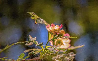 Photograph - Dogrose #g5 by Leif Sohlman