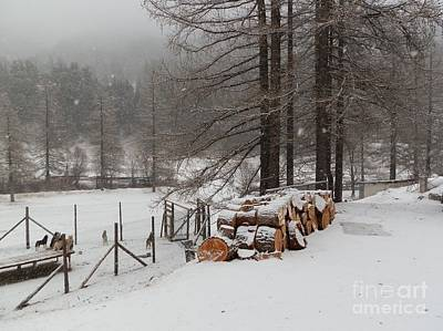 Winter Photograph - Dogs And Cut Wood by Margaret Brooks