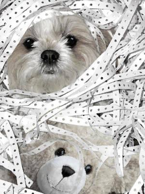 Dog's Best Friend - Shih Tzu Dog Portrait Art Print